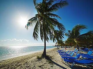 Palm trees and lounge chairs on a beach in the Bahamas
